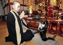 Pray_dog